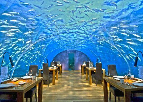Ithaa Undersea Restaurant,馬爾代夫 Maldives